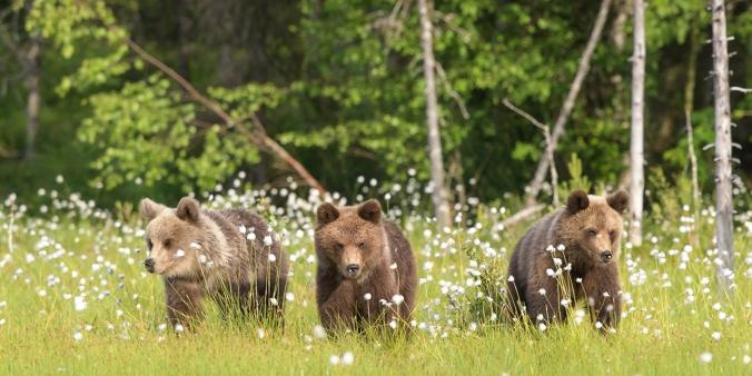 Post 12 Bear-10