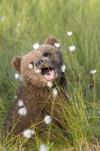 Bear cuteness :-)