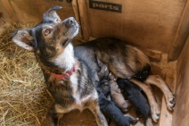 Proud mother with Puppies