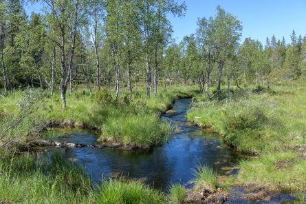 Saariselka Wilderness and Urho Kekkonen National Park
