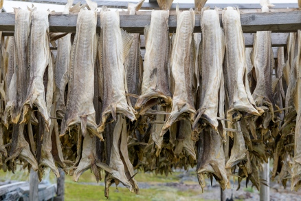 Racks to dry fish