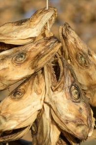 Dry fish heads - Laukvik