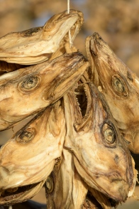Dry fish heads - Laukvik