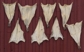 Dry fish in Laukvik