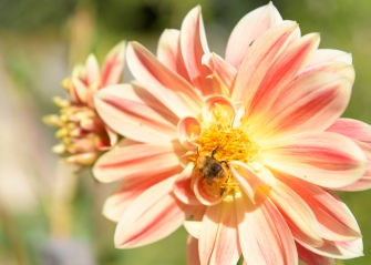 Flower Power and the bumblebee