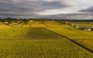 Vineyards (aerial shot)