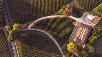 Vineyards (aerial shot)