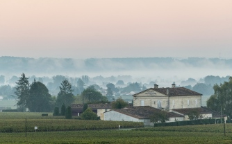 Morning mist over the vinyards