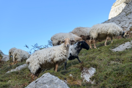 Friendly sheeps along the way