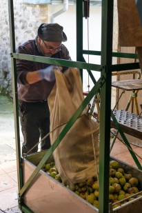 Cider making in progress at Asiego