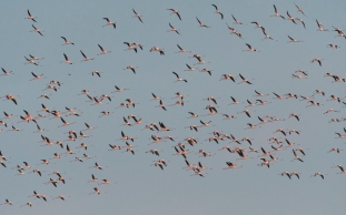 Flamingos everywhere