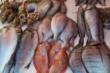 Fish stand at Essaouira Harbor