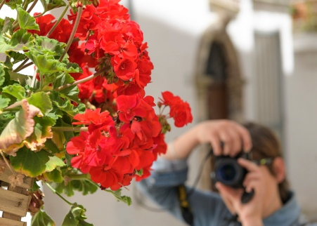 Isabel capturing the flowers
