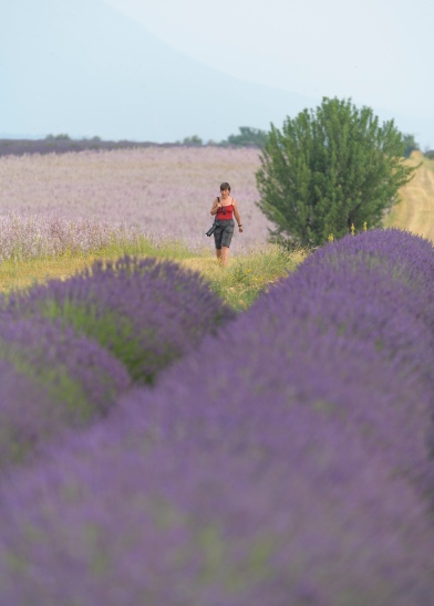 Isabel strolling the Lavender Fields
